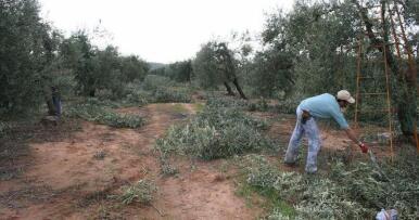 ¿Qué porcentaje supone la PAC en los ingresos de un agricultor? Un estudio europeo lo desvela